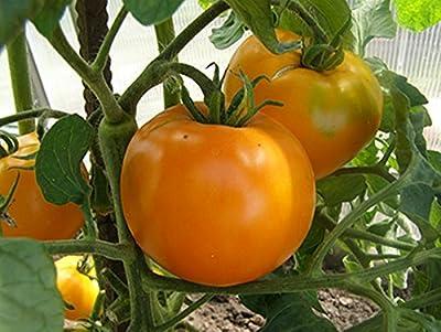 Seeds Orange Tomato Khurma - Persimmon Organically Grown Russian Heirloom
