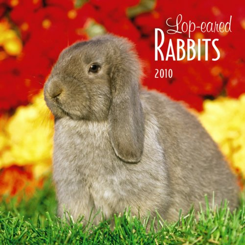 Guinea Pigs 2010 Calendar - Lop-Eared Rabbits 2010 Square Wall (Multilingual Edition)