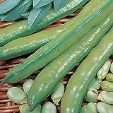 SeeKay Broad Bean Aquadulce 80 seeds Autumn - Spring sowing