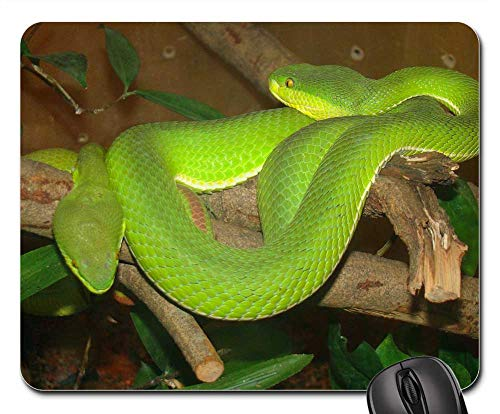 Mouse Pad - Palm Pit Vipers Asian Green Venomous Snakes