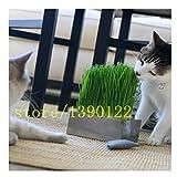 200 pcs CAT grass seeds home garden grass Foliage plant seeds wheat grass mint smell