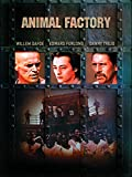 DVD : Animal Factory