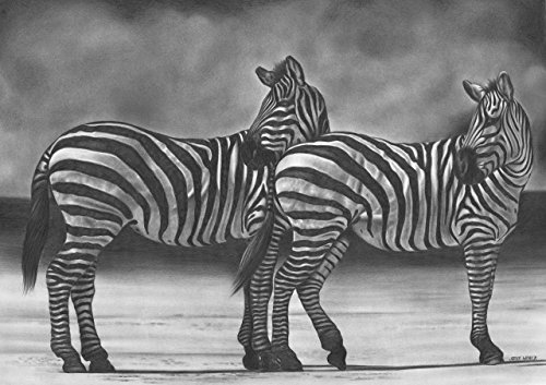 2 Zebras by Pencilworks Studio- Pencil Drawings by Jerry Winick