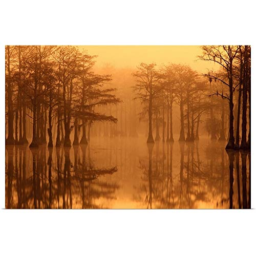 GREATBIGCANVAS Poster Print Entitled Georgia, Fall Cypress Trees in The Fog at George Smith State Park by Joanne Wells 24