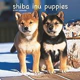 Shiba Inu Puppies 2008 Mini Wall Calendar (German, French, Spanish and English Edition)