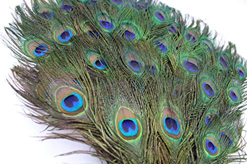 Garvest Natural Peacock Feathers - 10 to 12-Inch Eyed Peacock Tail Feathers - DIY Craft Decoration for Weddings, Halloween, Anniversaries, Christmas, Holidays, Costumes - Set of 50 Peacock Feathers
