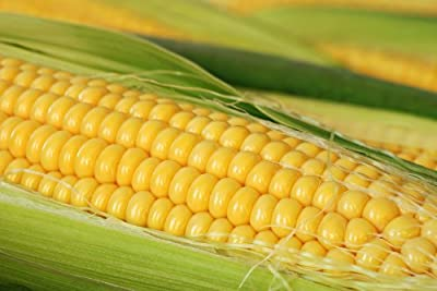 Serendipity Hybrid (Triplesweet) Corn Seeds