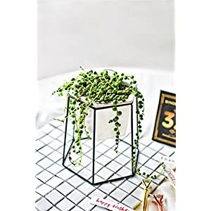 Geometric Planter Small White Ceramic Flower Pot with Gold Iron Metal Rack Holder for Succulents Herb Cactus Plant 53