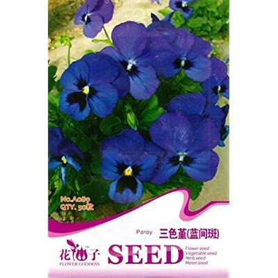 Business Sasha Each Pack 50 Pansy Seeds Beautiful Bright Blue Flowers Fragrant Seeds (1) : Garden & Outdoor