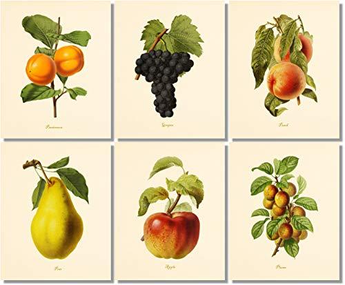 Vintage Fruit Art Prints - Kitchen Botanical Prints - (Set of 6) - Unframed - 8x10s