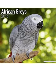 African Greys Calendar - Just African Greys Calendar - 2016 Wall calendars - Animal Calendars - Parrot Calendars - Monthly Wall Calendar by Avonside