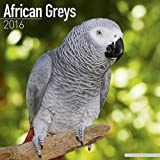 African Greys Calendar - Just African Greys Calendar - 2016 Wall calendars - Animal Calendars - Parrot Calendars - Monthly Wall Calendar by Avonside by
