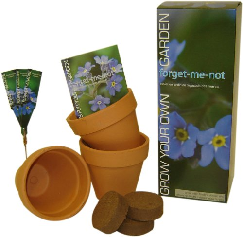 S.F. Imports GB-FORGET/LG Grow Your Own Large Flower Kit, Forget Me Not