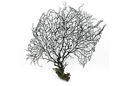 28cm Big Black Sea Fan Fish Tank Aquarium Decoration, Sea Coral Ornament TR-02 (Pack of 1) ()