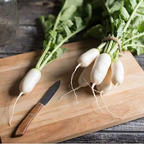 David's Garden Seeds Radish Daikon Mini Mak SL8273 (White) 200 Non-GMO, Hybrid Seeds