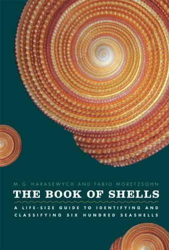 The Book of Shells: A Life-Size Guide