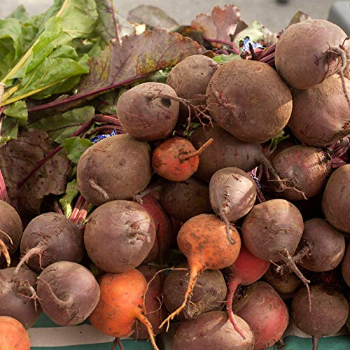 Organic Detroit Mix Beet Garden Seeds - 25 Lb Bulk - (Mix of Detroit Red & Golden Beets) Non-GMO, Heirloom Seed for Growing Microgreens, Vegetable Gardening by Mountain Valley Seed Company (Image #4)