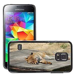 Super Stella Slim PC Hard Case Cover Skin Armor Shell Protection // M00105208 Fox Zoo Animal Sleep Sleeping // Samsung Galaxy S5 MINI SM-G800