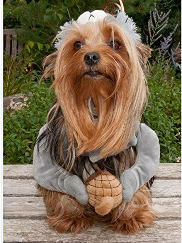Petco Halloween Canine Squirrel Dog Costume, (Squirrel Costume For Dogs)
