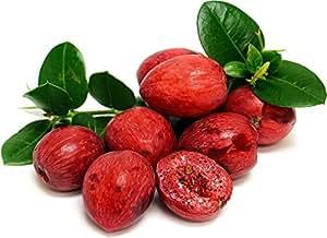 "Natal Plum Tree - Carissa grandifolia - 6"" Pot"