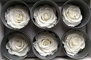 Verdadera, estabilizada Rose cabezales; Color Blanco; 6unidades)