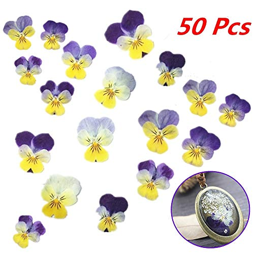 Xinhongo 50 Pcs Real Pansy Pressed Dried Pressed Flowers for Art Craft DIY Preserved Flower Decorations Resin Jewelry Pendant Crafts DIY Cards Making (Pressed Flower Cards)