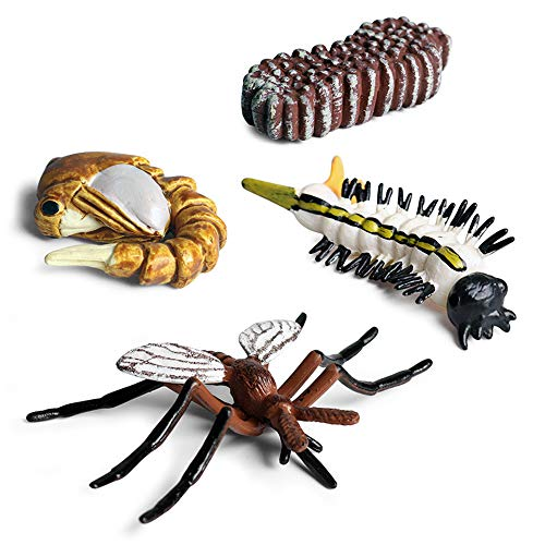 Plastic Realistic Animals Life Cycle Model Toy Educational Science Toys