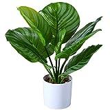 Fopamtri Fake Calathea Orbifolia Plant 16 Inch Faux