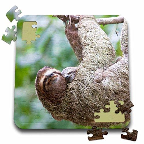 Danita Delimont - Wildlife - Brown-Throated Sloth wildlife, Corcovado Costa Rica - SA22 JGS0015 - Jim Goldstein - 10x10 Inch Puzzle (pzl_87170_2)