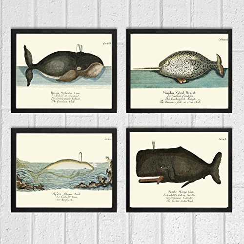 Whale Art Print Set of 4 Antique Beautiful Ocean Sea Marine Nature Colored Natural Science Chart Illustration Home Wall Decor Unframed GNT -