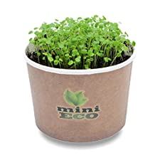 Watercress Microgreens Grow Kit. Approximately 1000 seeds. Organic Seeds Sprouting Growing Set. Grow Your Own Fresh Herbs On Windowsill. 100% Bio Ecological Product. Seeds, Compost and Pot included. Simple way to have a home planter. Vegetables Culture Seasoning Diet Heirloom Vitamin Edible Nasturtium Officinale Curled Peppergrass Recipe Healthy Cancer Pesto Supergreen Micro Crop Greens Superfood Raw Food Non GMO DIY Cress Indoor Kitchen Medicinal Healing Restaurant Office Plant