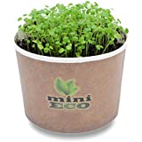 Organic Watercress Microgreens Grow Kit. Approximately 3000 seeds. Seeds Sprouting Growing Set. Best Plant Herbs Vegetables Micro Green