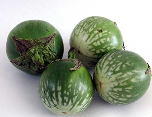 (Thai Round Eggplant Seed by Stonysoil Seed Company..Authentic Asian)