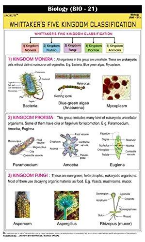 jagruti-whittakers-five-kingdom-classification-wall-chart-educational-charts