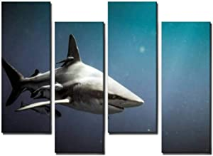 Wocatton Oceanic Blacktip Shark and Remora Fish Underwater symbiotic Wall Art Background Decor Pictures Print On Canvas Art Stretched and Framed Perfect Home Decoration
