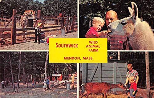 Mendon Massachusetts Southwick Wild Animal Farm Vintage Postcard JA455641