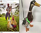 Yesito Chicken Harness Hen Size with 6-Foot