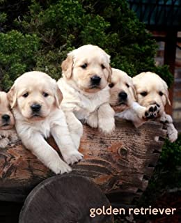 Buy Schleich Golden Retriever Puppy Multi Color Online At Low