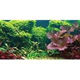 Aquatic Creations Static Cling Aquarium Background, 24 by 12-Inch, Tropical