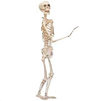 ILOVEFANCYDRESS 5 FOOT LIFESIZED POSABLE SKELETON HALLOWEEN PROP ...