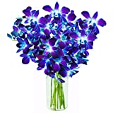 Valentine's Blue Sapphire Orchids: 10 Fresh Blue Dendrobium Orchids with Vase