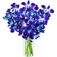 KaBloom Exotic Blue Sapphire Orchid Bouquet of 10 Fresh Blue Dendrobium Orchids from Thailand with Vase