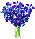 Exotic Blue Sapphire Orchid Bouquet of 10 Fresh Blue Dendrobium Orchids from Thailand with Free Vase Included