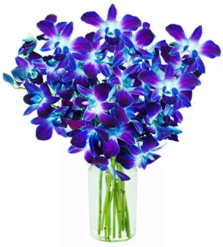 KaBloom Valentine's Day Special: Exotic Blue Sapphire Orchid Bouquet of 10 Fresh Blue Dendrobium Orchids from Thailand with Vase