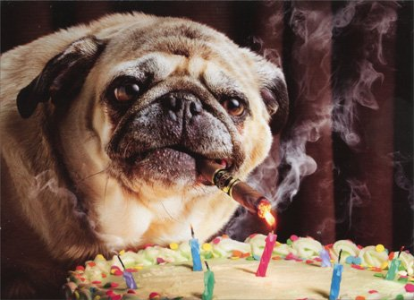 Pug Lights Cigar With Candle Funny Birthday Card