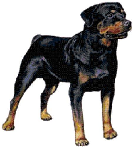 Akc Rottweiler - 9