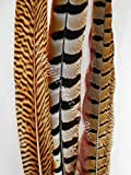 "Pheasant Feathers, Decoration Mix, 10-15"" per 12, by Lamplight Feather Inc."