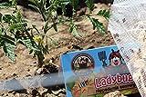 NaturesGoodGuys - Live Ladybugs