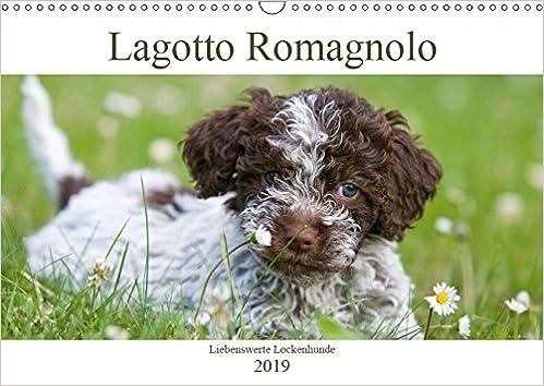 Italienische wasserhunde
