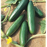 Cucumbers Product